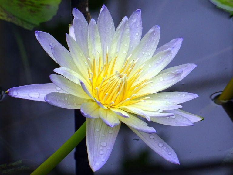 Цветята в древността